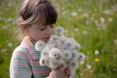 Schönes Mädchen mit einem Blumenstrauß des weißen Löwenzahns auf einer Frühlingswiese stockbild