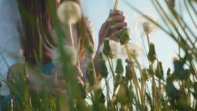 Schönes Mädchen sammelt Löwenzahn auf grünem Gras stock footage