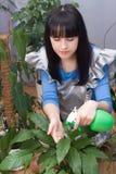 Schönes Mädchen sprüht Grünpflanzen des Wassers stockfotos