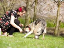 Schönes Mädchen, welches das Streicheln ihres Hundes während eines Wegs im sprin hat stockbild