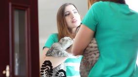 Schönes Mädchen wendet Make-up vor einem Spiegel und dem Halten eines Kätzchens an stock footage