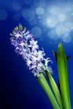 Schönes magisches mit Blumenbild Lizenzfreies Stockfoto
