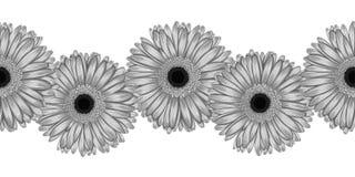 Schönes Monochrom, nahtloses horizontales Rahmenschwarzweiss-element des grauen Gerbera blüht Lizenzfreie Stockbilder
