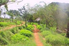 Schönes Morgenlicht durch die Front des Kameraobjektivs im Park mit grünen Wiesen - Bild lizenzfreies stockbild