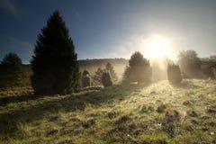Schönes Morgensonnenlicht im Nebel lizenzfreie stockfotografie