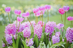 Schönes multiflowers Bett Stockfotografie