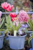 Schönes multiflowers Bett Stockfotos