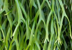 Schönes Muster der Blätter stockbild