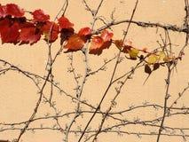 Schönes Muster von Efeuniederlassungen Lizenzfreie Stockbilder