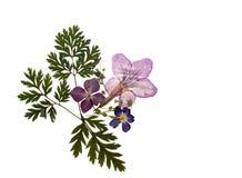 Schönes natürliches gepresstes Blumenblumenstraußflorenelement lokalisiert auf Weiß Stockbilder