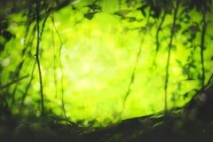 Schönes natürliches grünes Blatt und abstraktes Unschärfe bokeh beleuchten backg lizenzfreies stockfoto