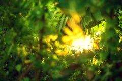 Schönes natürliches grünes Blatt und abstraktes Unschärfe bokeh beleuchten backg lizenzfreie stockfotografie
