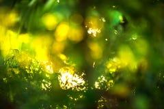 Schönes natürliches grünes Blatt und abstraktes Unschärfe bokeh beleuchten backg stockfoto