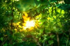 Schönes natürliches grünes Blatt und abstraktes Unschärfe bokeh beleuchten backg lizenzfreie stockfotos