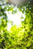 Schönes natürliches grünes Blatt und abstraktes Unschärfe bokeh beleuchten Hintergrund stockfoto