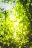 Schönes natürliches grünes Blatt und abstraktes Unschärfe bokeh beleuchten Hintergrund lizenzfreie stockfotos