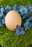 Schönes natürliches Osterei Stockfoto