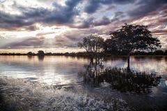 Schönes Natur lanscape Die Baumreflexion im Wasser vorbei Stockfoto