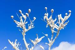 Schönes Natur- und Landschaftsfoto des Baums mit Schnee und der gefrorenen Niederlassungen mit blauem Himmel Lizenzfreie Stockfotos