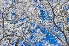 Schönes Natur- und Landschaftsfoto des Baums mit Schnee und der gefrorenen Niederlassungen mit blauem Himmel Lizenzfreies Stockfoto