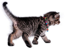 Schönes nettes altes Kätzchen des Monats Stockfotografie