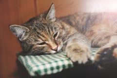 Schönes nettes Katzenschlafen Stockfoto