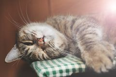 Schönes nettes Katzenschlafen Stockfotos