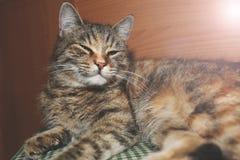 Schönes nettes Katzenschlafen Stockbilder