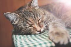 Schönes nettes Katzenschlafen Lizenzfreies Stockbild