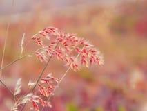 Schönes neues rosa Blumenfeld, abstrakter träumerischer Blumenhintergrund, Sonnenlicht, Weichzeichnung, Frühlings-Saison lizenzfreie stockfotografie