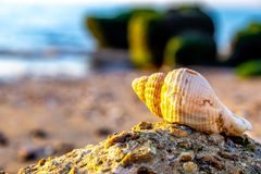 Schönes Oberteil gefunden am Strand lizenzfreies stockbild