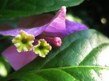 Schönes Orchideenblumenblumenblatt Stockfoto