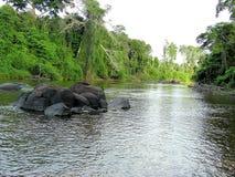 Schönes Panorama von einem Fluss im Amazonas-Wald lizenzfreies stockfoto