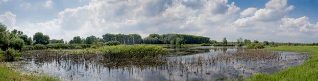 Schönes Panoramafoto des Sees und des Waldes stockbilder