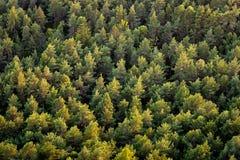 Schönes panoramisches Foto über den Oberteilen der Kiefernwaldvogelperspektive lizenzfreie stockfotografie