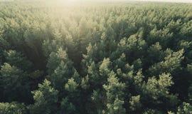 Schönes panoramisches Foto über der Oberteilekiefernwalddraufsicht Lizenzfreies Stockbild