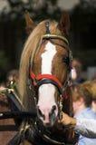 Schönes Pferd Stockbild