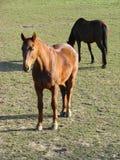 Schönes Pferd 2 Lizenzfreie Stockfotos