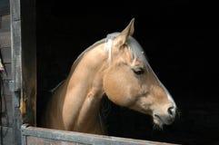 Schönes Pferd. Lizenzfreie Stockfotos