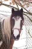 Schönes Pferd Stockbilder