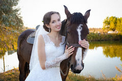 Schönes Pferd Lizenzfreies Stockfoto