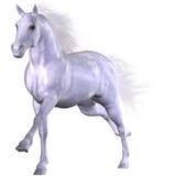Schönes Pferd Stockfoto