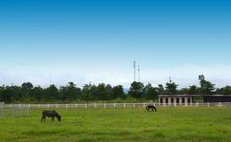 Schönes Pferd auf der Ranch stockfotografie