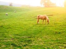 Schönes Pferd auf einem Gebiet lizenzfreies stockbild
