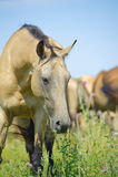 Schönes Pferd in der Herde Stockbilder