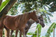 Schönes Pferd in einer Ranch stockfotos