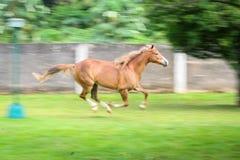 Schönes Pferd in einer Ranch lizenzfreies stockbild