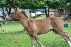 Schönes Pferd in einer Ranch lizenzfreie stockfotografie