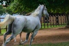 Schönes Pferd in einer Ranch stockfotografie
