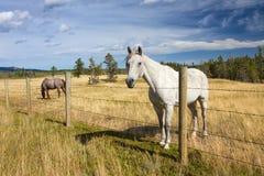 Schönes Pferd hinter einem Bauernhofzaun Lizenzfreies Stockfoto
